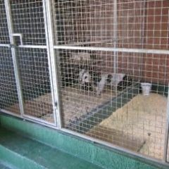 Hygienic Dog Kennel Flooring Northumberland