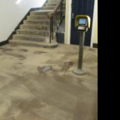 Heavy duty epoxy resin floor screeds North East England